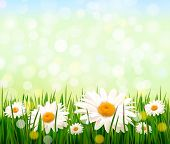 Nature background with green grass, daisies and a blue sky. Vector