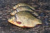 Live Freshwater Fish Crucian On The Old Wooden Board