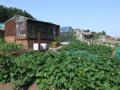 Allotment With Vegetables