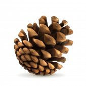 stock photo of conifers  - Pine cone vector illustration - JPG