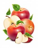 Red ripe apples and apples slices with green leaves and water drops. Photo-realistic vector illustration