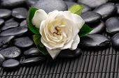 white gardenia flowers and black stones on mat