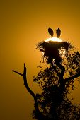 Dawn At Jabiru Stork Nest
