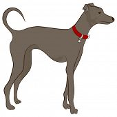 An image of a greyhound dog.
