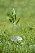 small green plant in test tube