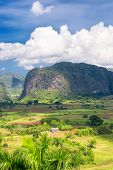 The Vinales valley in Cuba with a view of the mountains and puffy white  clouds on a blue sky