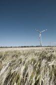 Wind Mill In Grain
