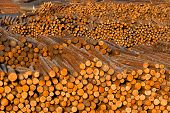 Log Ends Wood Rounds Cut Measured Tree Trunks Lumber Mill