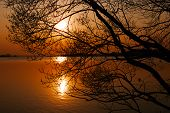 Silhouette Of Branching Tree Over Lake At Sunset