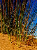image of dune grass  - Dune Grass on UK Coastal Sand Dune