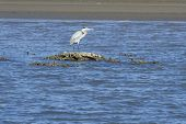 Blue Heron On Sandbar