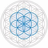picture of symmetrical  - Seed of Life in the center of the Flower of Life - JPG