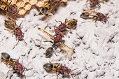 foto of wasp sting  - Close up of brown paper wasp workers - JPG