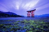 image of yakima  - Tori in Hiroshima Japan and Green algae - JPG