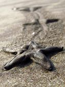 Starfish Legacy