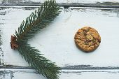 One biscuit and green conifer on white wooden background