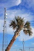 Palm tree and radio mast
