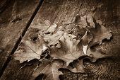 Sepia toned Maple leaves on wood