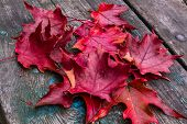 Red Maple leaves on wood