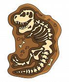 Dinosaurs Fossil