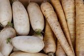 Turnip Group From Marketplace