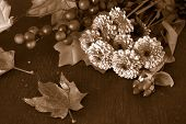 Fall Flowers In Sepia