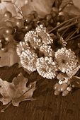 Fall Flowers In Sepia Tone