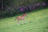 Calf running in a field