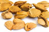 Seeds and apricot kernel