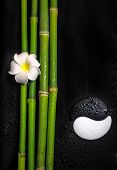 Beautiful Spa Still Life Of Symbol Yin Yang, Frangipani Flower And Natural Bamboo Stems With Dew, Cl