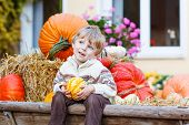 Little Cute Kid Boy Sitting With Different Pumpkins On Halloween Or Thanksgiving Harvest