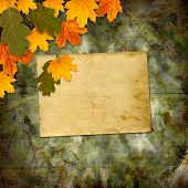 Bright Multicolored Autumn Leaves On The Abstract Beautiful Background