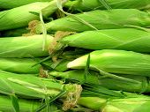 raw corn husks