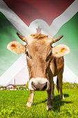Cow With Flag On Background Series - Burundi