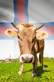 Cow With Flag On Background Series - Faroe Islands