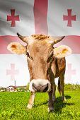 Cow With Flag On Background Series - Georgia
