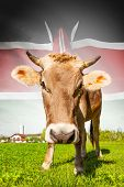 Cow With Flag On Background Series - Kenya