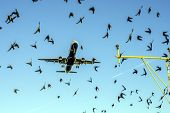 Protection of Birds and Air Traffic