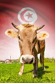 Cow With Flag On Background Series - Tunisia