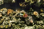 Colorful Fish Swim On A Coral Reef In The Red Sea