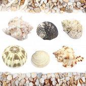 pic of cockle shell  - Collage of shells and other beach flotsam isolated on white - JPG