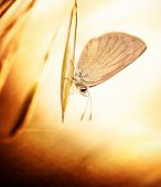Beautiful aged grunge photo of butterfly sitting on plant, flora and fauna on spring time, little insect with wings, retro style picture