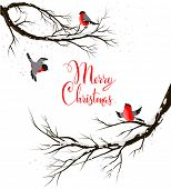 Winter birds on branches. Seasonal background with copy space.