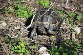 Older Turtles