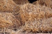 stock photo of hay bale  - Hay stack - JPG