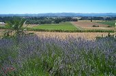 Oregon Wineries And Vineyards