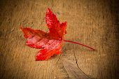 Maple Leave On Wooden Table