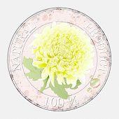 yelloy chrysanthemum.waterdrop. natural product label.vector illustration