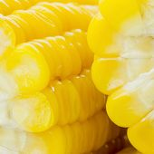 picture of corn-silk  - Closeup Grains of ripe yellow color corn - JPG