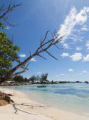 Dead Tree Beach